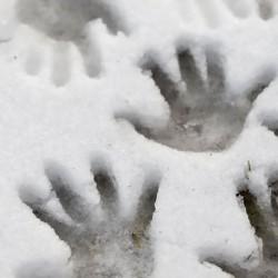 Faller 170602 HO 1/87 Wall board, Natural stone ashlars