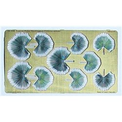 EDUARD 36206 1/35 leaves palm - Washingtom Filifera